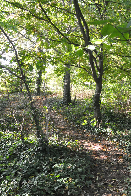 Woodland in the Goat Walk Land Trust