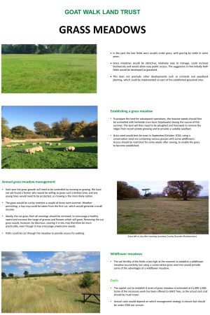 grass_meadows